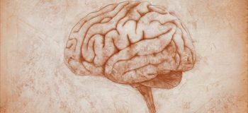 Cerebro dibujado